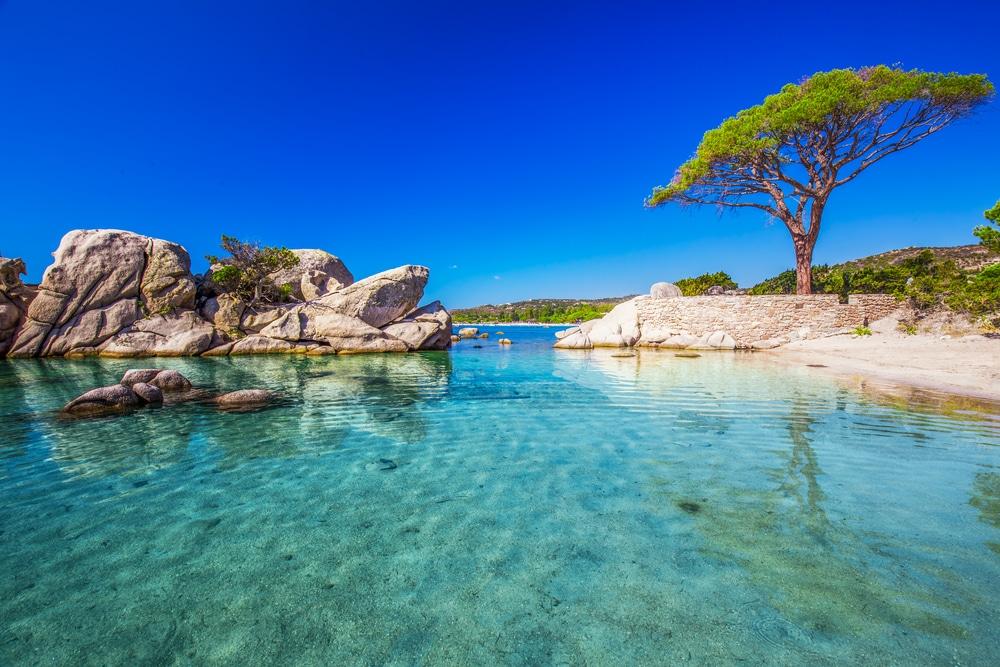 La plage de Palombaggia et le pin